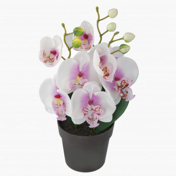 Aile Decorative Orchid Flower with Pot