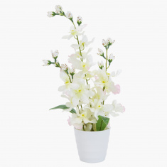 Carol Decorative Dancing Orchid with Pot