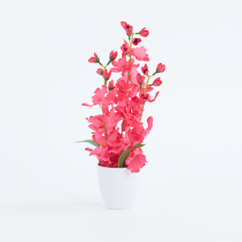 Carol Dancing Orchid with PVC Pot