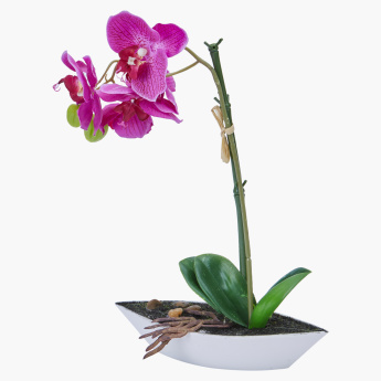 Orchid Flower in Decorative Pot